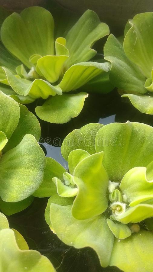 Green gress on the water. Macro, focus, photography, natur, nature, organic, fresh royalty free stock images