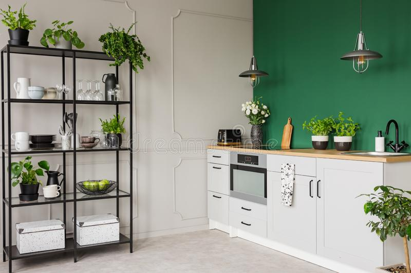 Green and grey kitchen interior with plants and herbs. Real photo with copy space stock photography