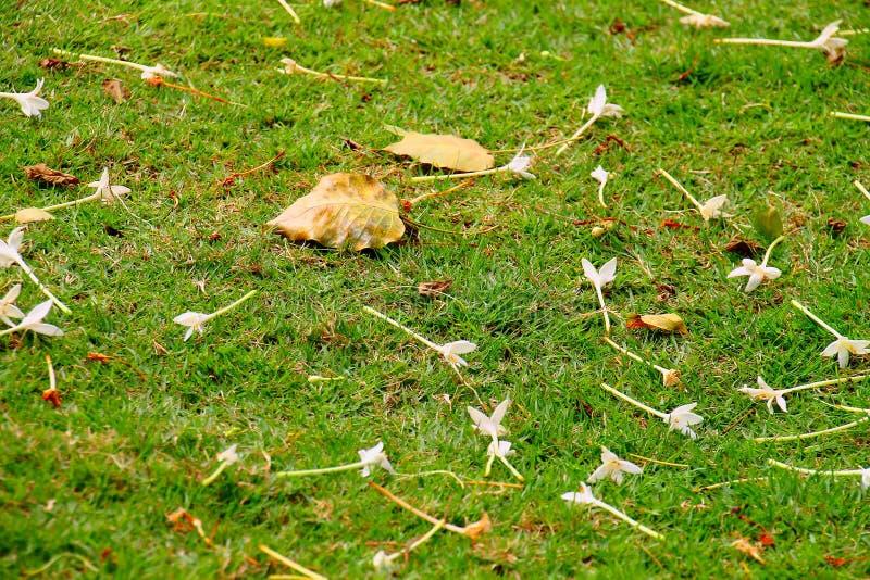 Green ground. Grass ground beside walkpath in park stock photos
