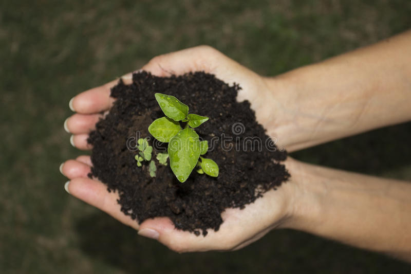 Green ground hands. Two hands holding and caring a young green plant / planting tree / growing a tree / love nature / save the world royalty free stock photography