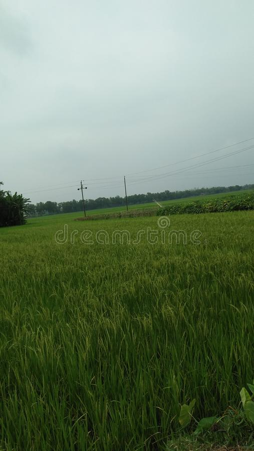 Green grown field stock photography