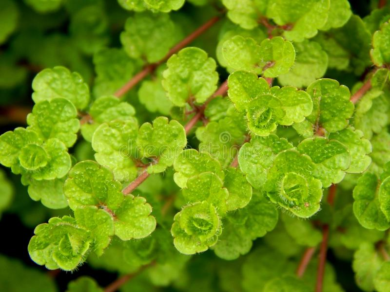 Green growth in nature. Green growth on the nature of the leaves royalty free stock photography
