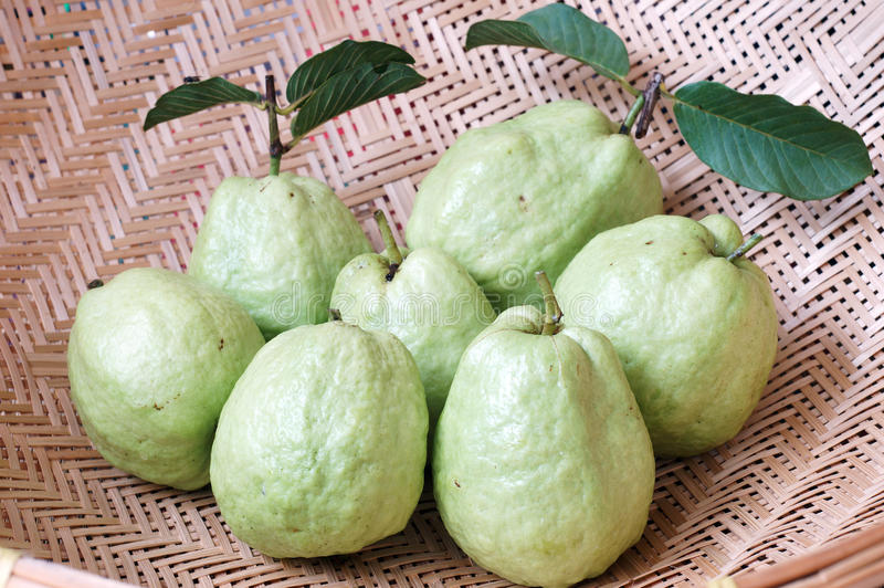 Green Guava royalty free stock image