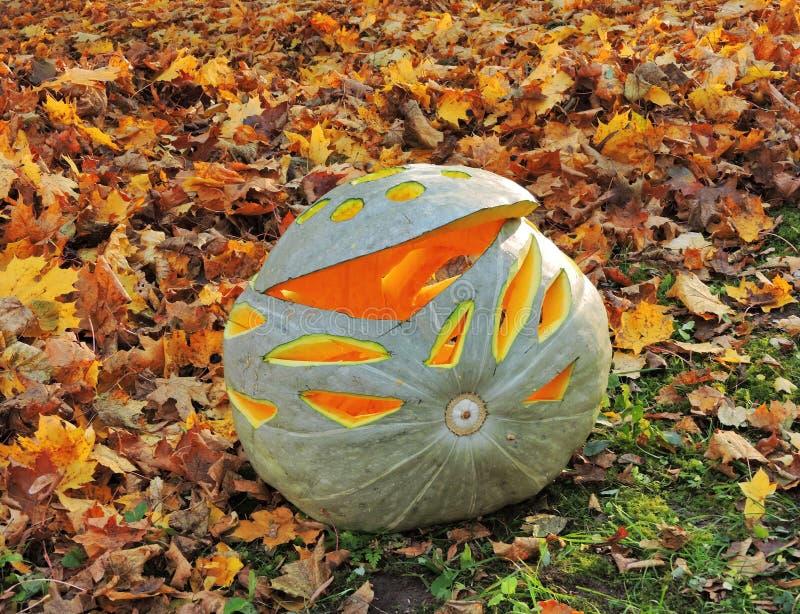 Green Halloween pumpkin stock photo