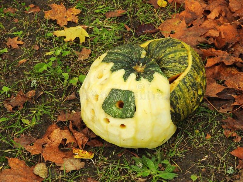 Green Halloween pumpkin royalty free stock photos