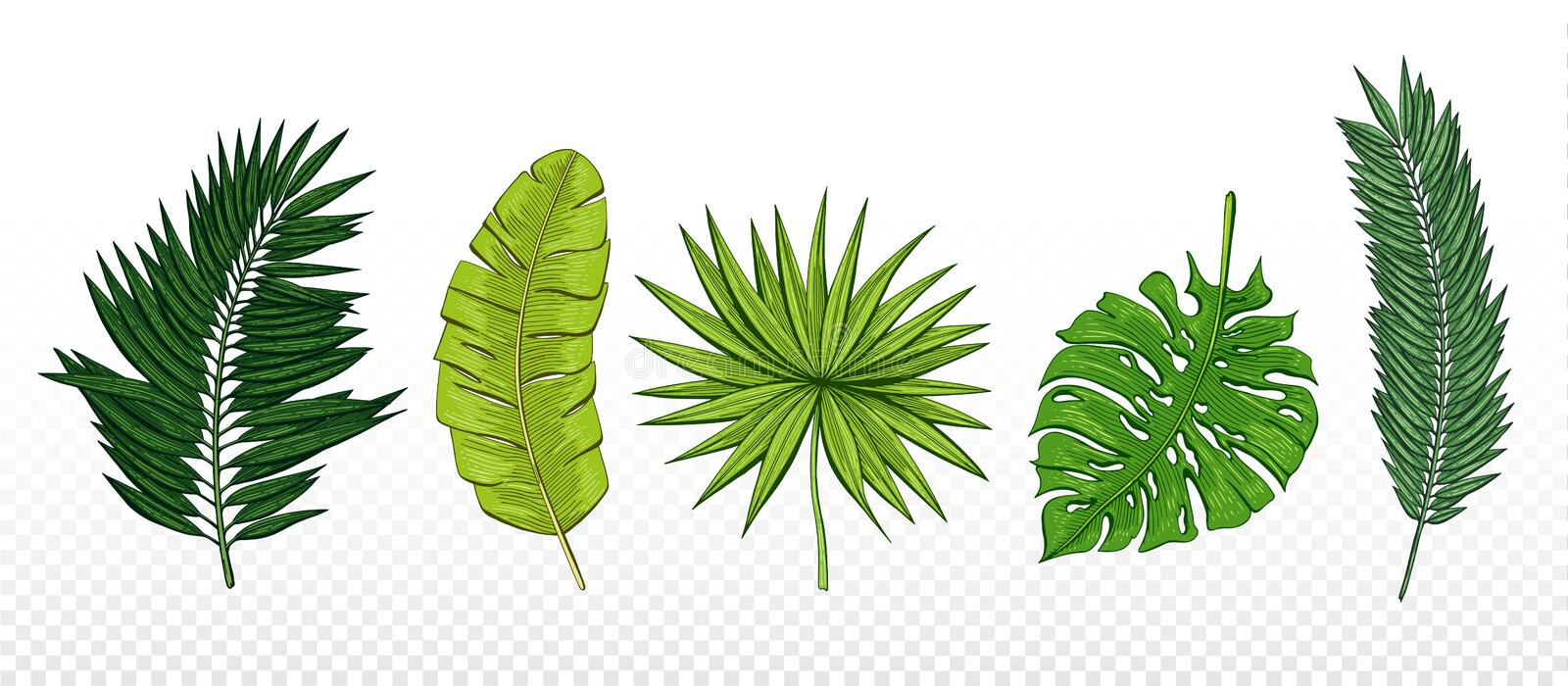 Green hand drawn set with tropical leaves chamaerops, banana palm, chamaedoria, monstera. Design elements for invitations, greetin vector illustration