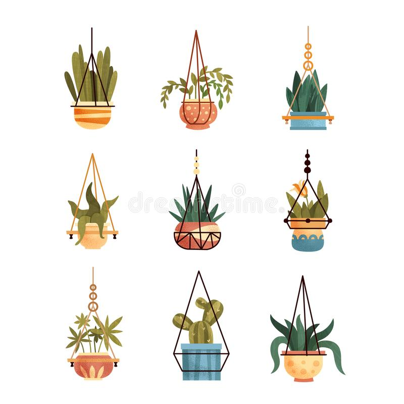 Green hanging indoor house plants set, elements for decoration home or office interior vector Illustrations on a white royalty free illustration