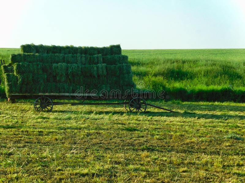 Green hay bales on a cart, southeastern Pennsylvania. Stacks of green alfalfa bales on a cart or trailer, southeastern Pennsylvania stock images