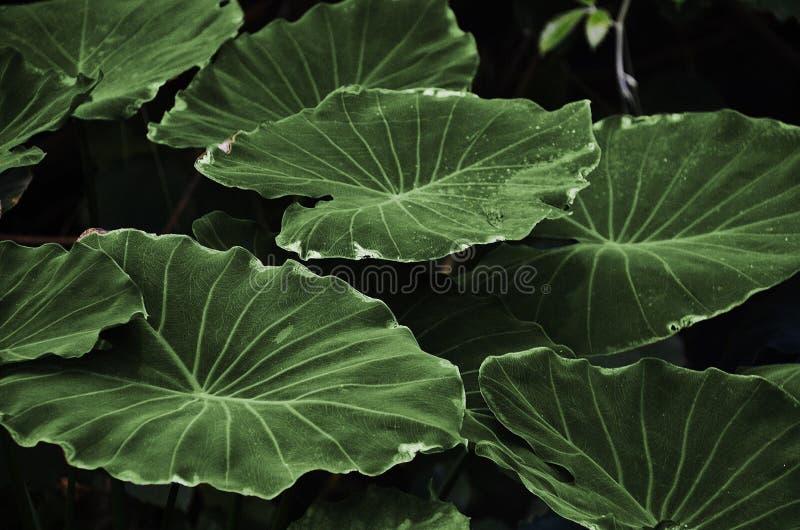 Green Heart Shape Leaf Free Public Domain Cc0 Image