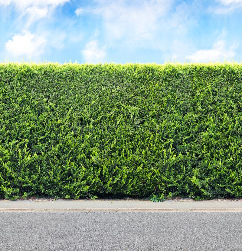 Green hedge from evergreen plants with sky and gravel road. Sea stock image
