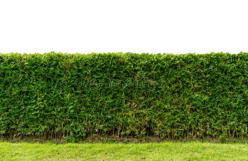 Green hedge fence stock image