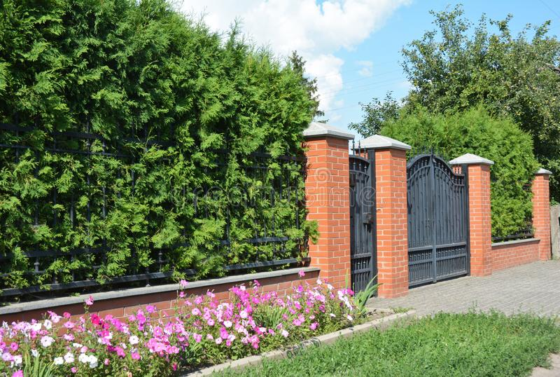 Green hedges or green fence design with metal door and metal garage gate. Green hedge from thyja occidentalis stock photography