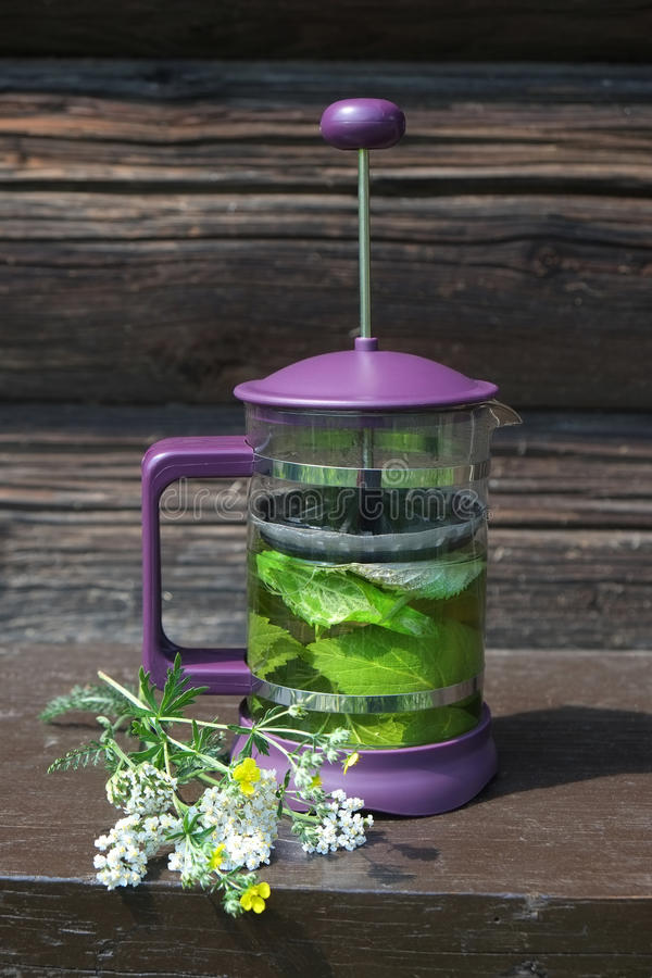 Green herbal tea in a French press stock photo