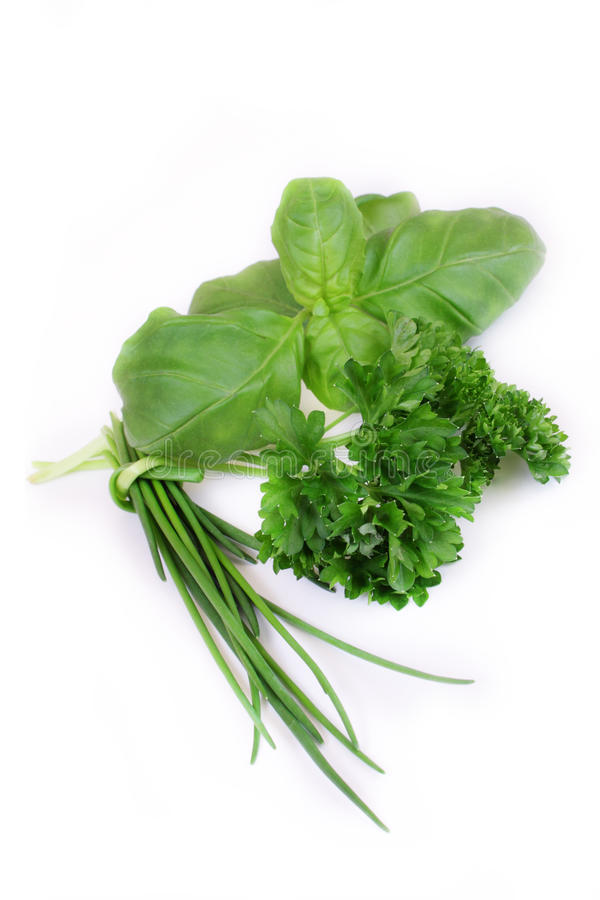 Green herbs. On white background stock images