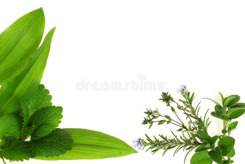 Green Herbs. Lemon balm, thyme, rosemary and oregano - aromatic herbs royalty free stock photo