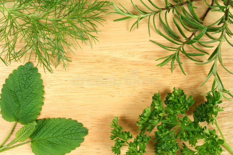 Green herbs. Dill, rosemary, lemon balm and parsley. Green herbs border background stock image