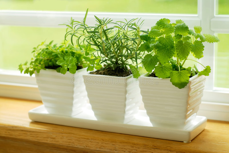Download Green Herbs On A Window Sill Stock Image - Image: 4214853