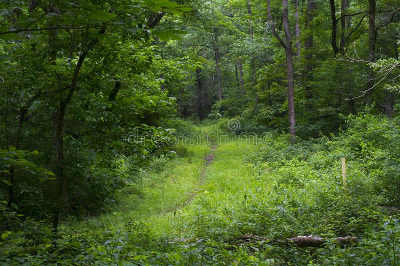 Hiking path through dense forest stock image