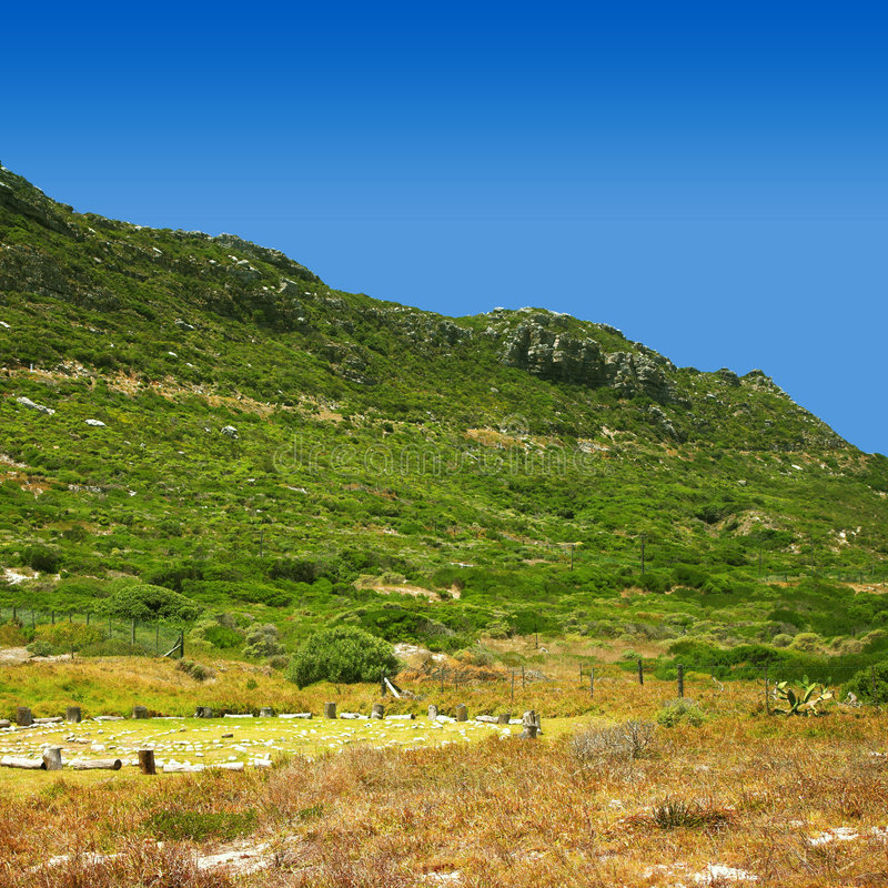Green hill. Hill in Cape Point Nature reserve covered with fine shrubs typical for South Africa royalty free stock photo