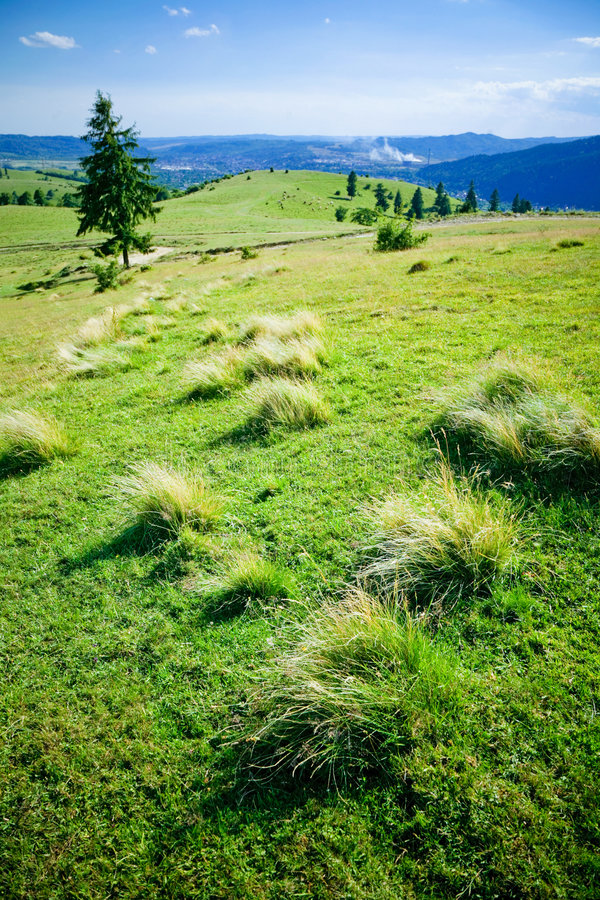 Download Green hill stock photo. Image of summertime, trees, beauty - 2756190