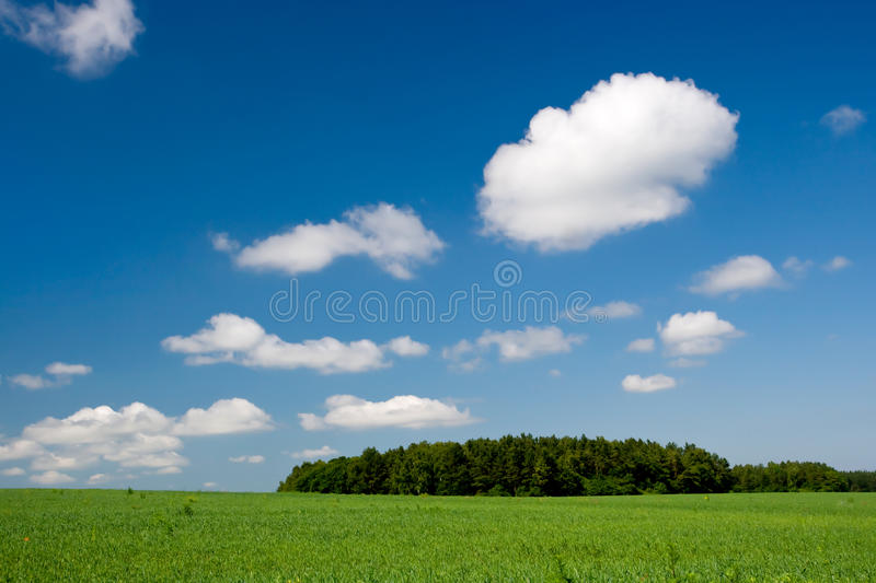 Green hill with clear blue sky. And clouds royalty free stock photos