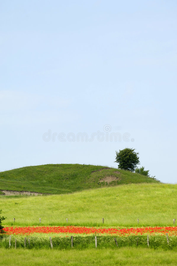 Green hill and tree royalty free stock image