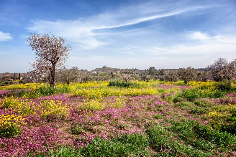 Green hills, flowering trees and flowers, beautiful spring lands stock photography