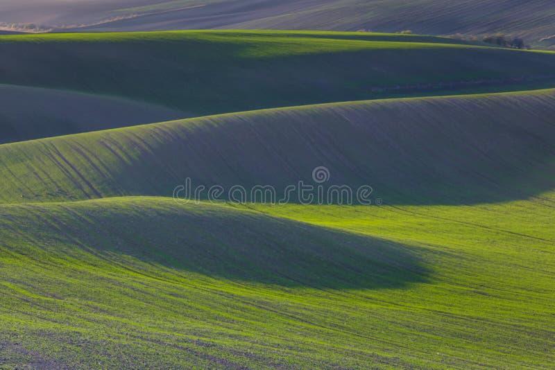 Green hills of Moravia. Czech Republic stock image