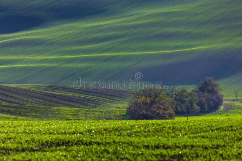 Green hills of Moravia. Czech Republic stock photography
