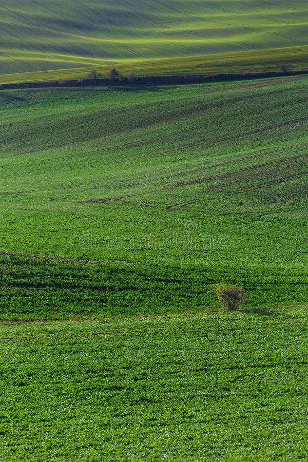 Green hills of Moravia. Czech Republic royalty free stock photography