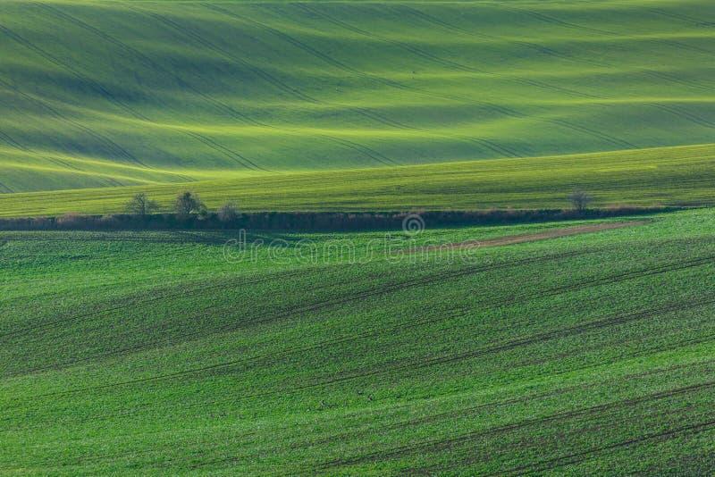 Green hills of Moravia. Czech Republic royalty free stock photo