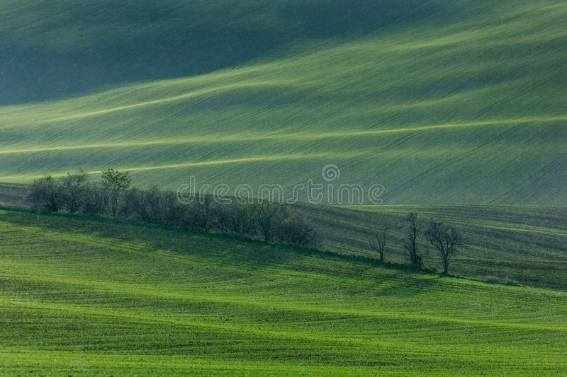Download Green hills of Moravia stock photo. Image of europe - 107144884
