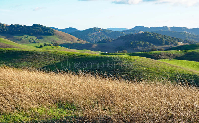 Green Hills of Sonoma County. Early rains bring autumn green to the hills outside Petaluma, California. A beautiful fall afternoon at Helen Putnam State Park in royalty free stock images