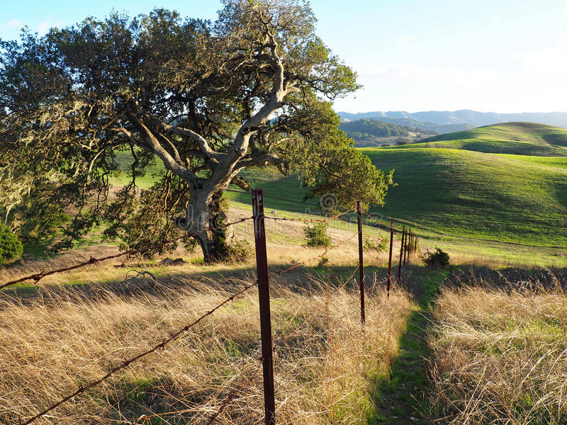 Green Hills of Sonoma County. Early rains bring autumn green to the hills outside Petaluma, California. A beautiful fall afternoon at Helen Putnam State Park in stock photography