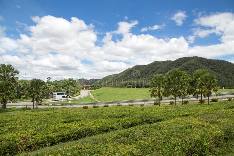 Green hills and Tree garden lush grass, blue sky with white clouds. Fence landscape kentucky new bay zealand background beauty hipster havelock field panoramic royalty free stock photos