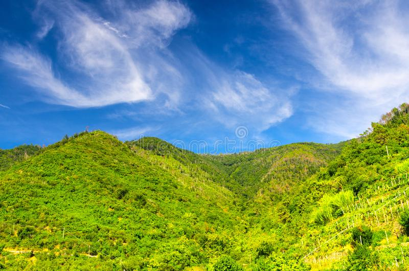 Green hills with vineyard bushes and trees, blue sky with transparent white clouds copy space background, view from Corniglia, Nat. Ional park Cinque Terre, La stock images