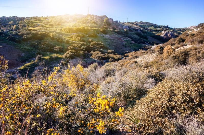 Green hills and yellow flowers in the sun, a beautiful summer sp stock photography