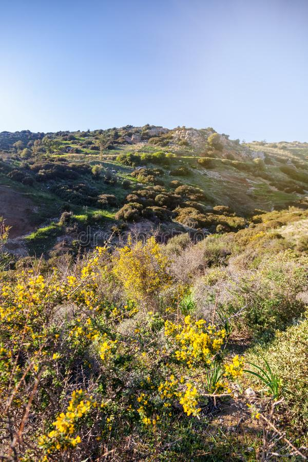 Green hills and yellow flowers in the sun, a beautiful summer sp stock image