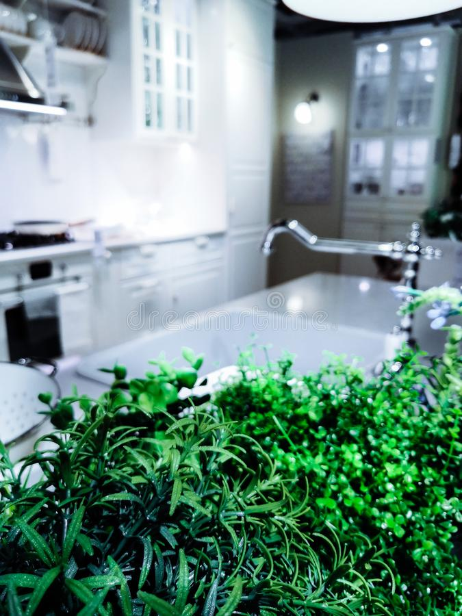 Green home plants used in cooking, food in the modern kitchen in bright colors. stock images