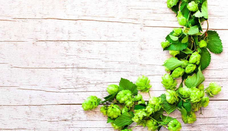 Green Hop  with leaves on rustic background.  Brewing beer ingredients stock photography