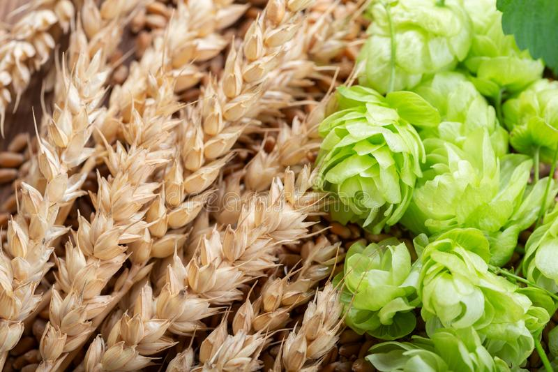 Green hops, wheat ears and grains stock photography