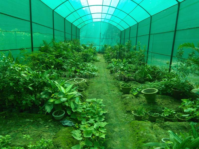 Green house stock image