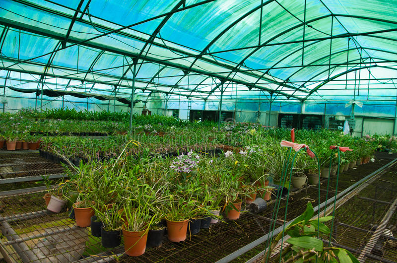 Green house orchid flower nursery royalty free stock photography