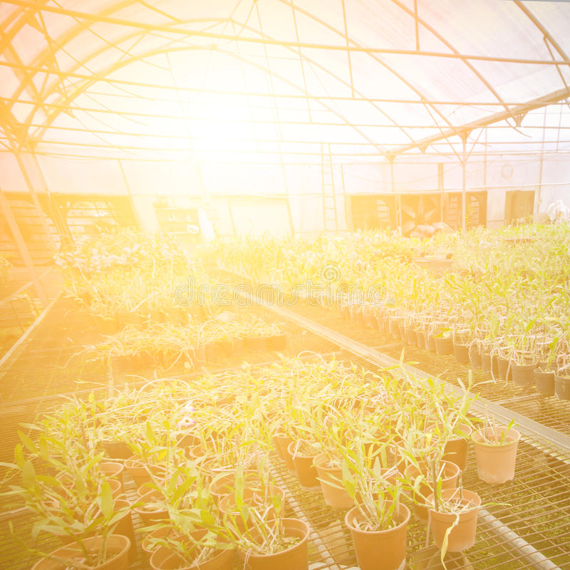 Green house orchid flower nursery stock image