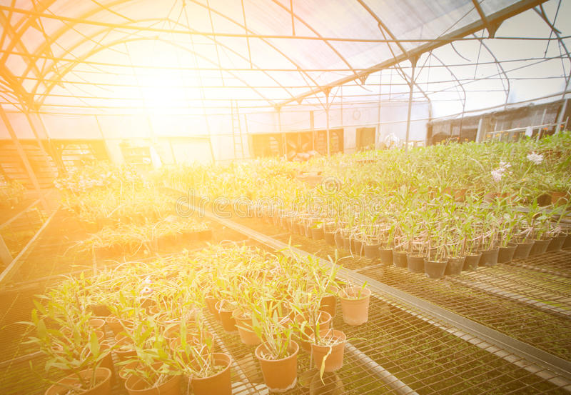 Green house orchid flower nursery royalty free stock photo