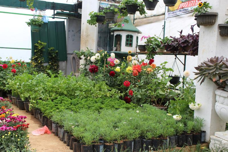 Green house plant nursery with various flowers. Plants and landscaping items stock photography