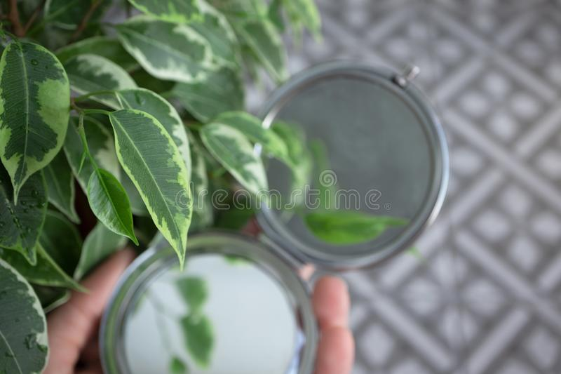 Green house plants on foreground of patterned floor and opened round mirror in female hand royalty free stock photos