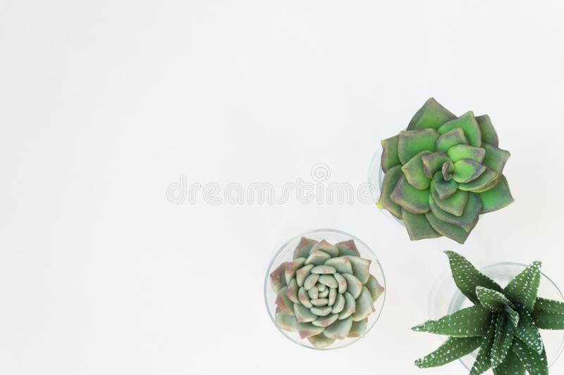 Green house plants potted, succulentson clean white backg. Three pots with home plants. Place for text royalty free stock images