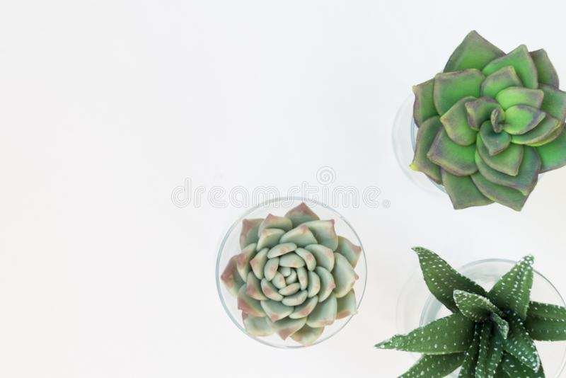 Green house plants potted, succulentson clean white backg. Three pots with home plants. Place for text royalty free stock photos