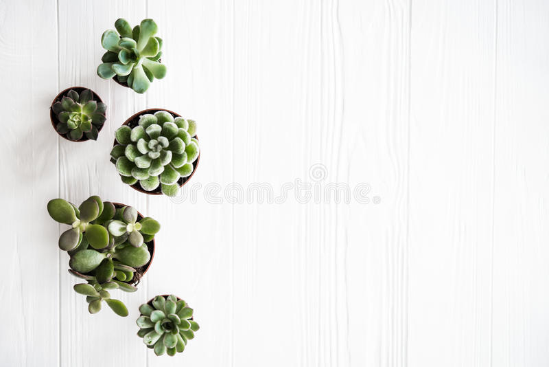 Green house plants potted, succulentson clean white wooden backg. Round. Home gardening, close-up with copyspace. Scandinavian rustic style decor royalty free stock image